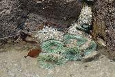 Green Sea Anemones — Stock Photo