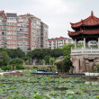 Lotuses in Quanzhou — Stock Photo