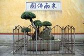 Sacral tree — Stock Photo