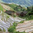 Longsheng Rice Terraces; China - 图库照片