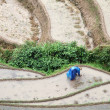 Longsheng Rice Terraces — Stock Photo
