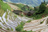 Longsheng Rice Terraces; China — Foto Stock