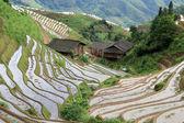 Longsheng Rice Terraces; China — Stock Photo