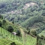 Village and tea — Stock Photo #11921569