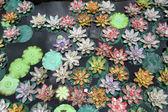 Plastic lotuses — Stock Photo