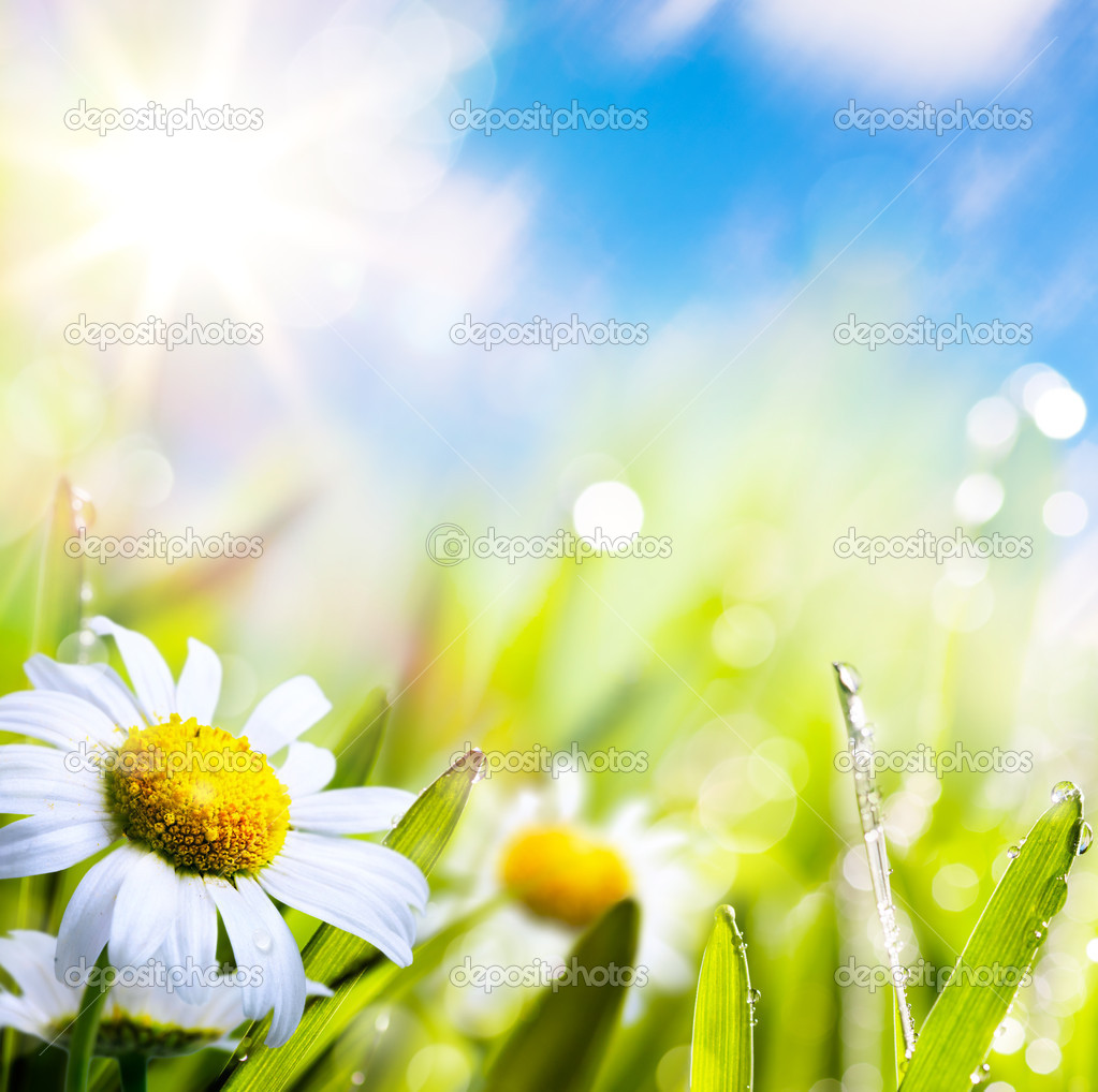 Art abstract background summer flower in grass with water drops on sun sky — Stock Photo #10883644