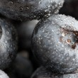 Freshly Washed Blueberries - Stock Photo