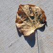 Stock Photo: Fallen leaf with dew