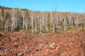 Dixie National Forest Lava Field — Stock Photo