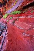 Emerald Pool Trail in Utah — Stock Photo