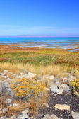 Great Salt Lake State Park — Foto de Stock