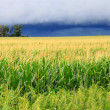Stock Photo: Thunderstorm Over Illinois Cornfield