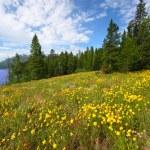 Grand Teton National Park — Stock Photo #10968116