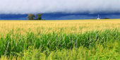 Thunderstorm Over Illinois Cornfield — Stock Photo
