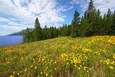 Parque nacional de grand teton — Fotografia Stock