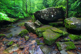 Tranquil Creek Scene in Alabama — Stock Photo