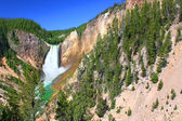 Lower Falls of the Yellowstone River — Stock Photo