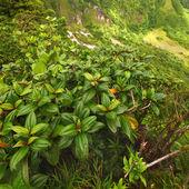 Saint Kitts Tropical Vegetation — Stock Photo