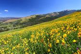 Yellowstone Summer Scenery — Stock Photo