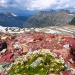 Glacier National Park Montana — Stock Photo