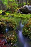 Cubiertos de musgo bosque y arroyo — Foto de Stock