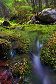 Moss Covered Forest and Stream — Stock Photo