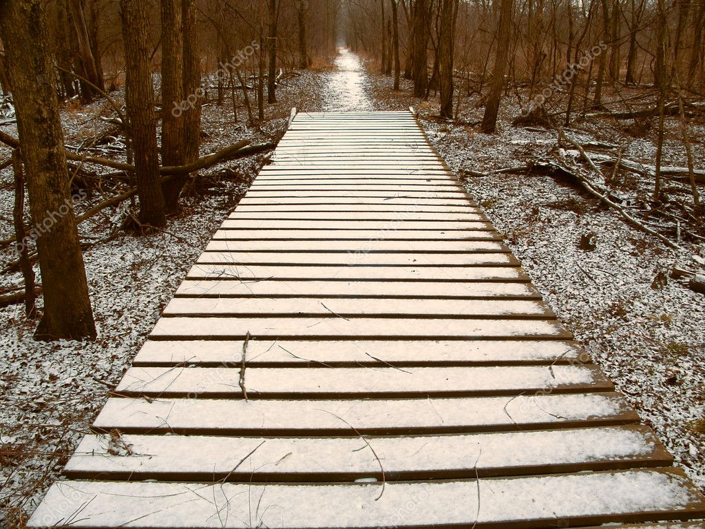 Light snow over a wooden boardwalk on an Illinois hiking trail.  Stock Photo #11587062