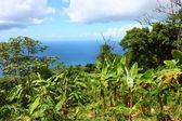 Tortola British Virgin Islands — Stock Photo