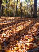 Evening Autumn Scenery in Illinois — Stock Photo