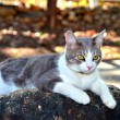 Cat on Rock — Stock Photo #11670733