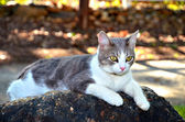 Cat on a Rock — Stock Photo