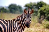Akagera National Park in Rwanda — 图库照片