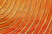 Orange shape — Stock Photo