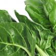 Chard leaves — Stock Photo