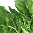 Stock Photo: Chard leaves