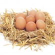 Stock Photo: eggs in a nest