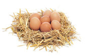 Eggs in a nest — Stock Photo