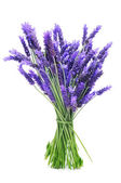 Bunch of lavender — Foto Stock