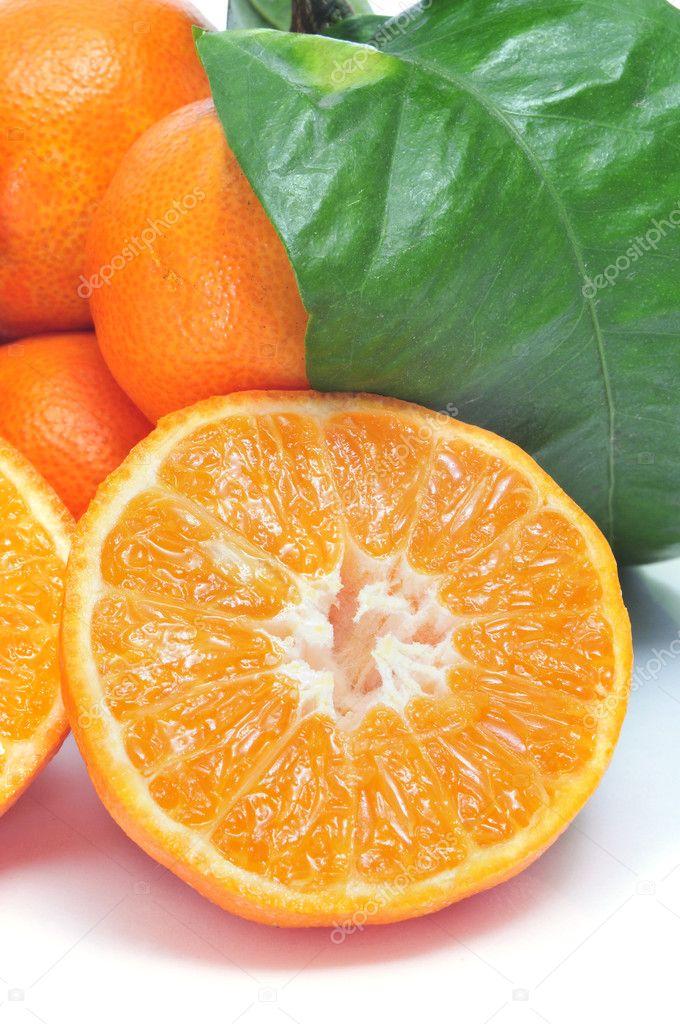 橘子树_橘子树图片_乐乐简笔画