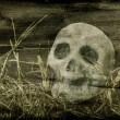 Stock Photo: Skull background