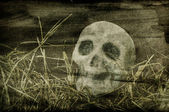 Skull background — Stock Photo