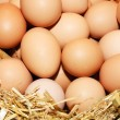 Stock Photo: Eggs