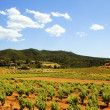 Montferri vineyards of Tarragona in Spain — Stock Photo