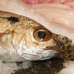 Fish — Stock Photo #12019645