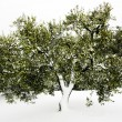 Olive tree snow — Stock Photo #12019826