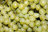 Grapes — Stockfoto