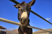 Donkey on a farm on the blue sky — Stock Photo