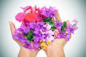Mani piene di fiori — Foto Stock