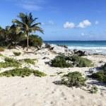 Desert mexican beach — Stock Photo
