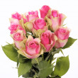 Stock Photo: Pink roses square